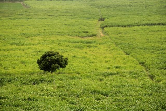 土地のイメージ写真
