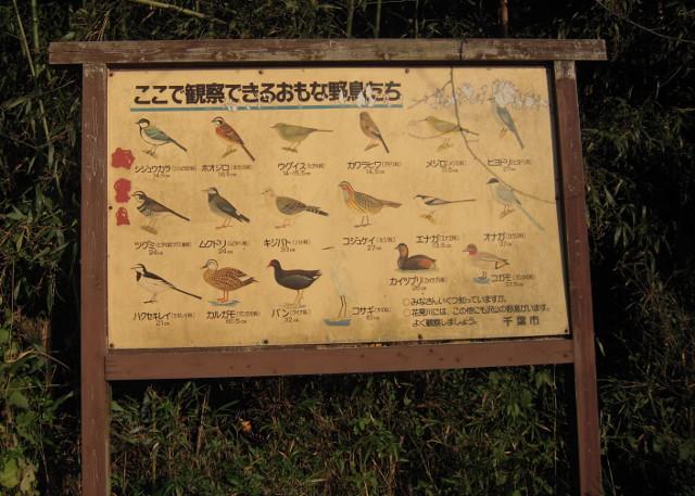 花見川サイクリングロードで見られる野鳥リスト