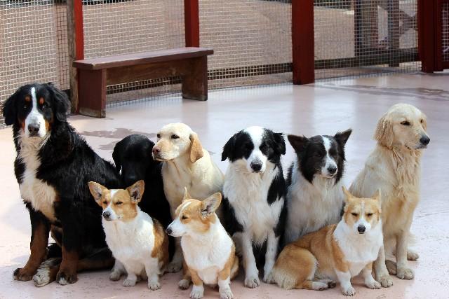 たくさんの犬の写真