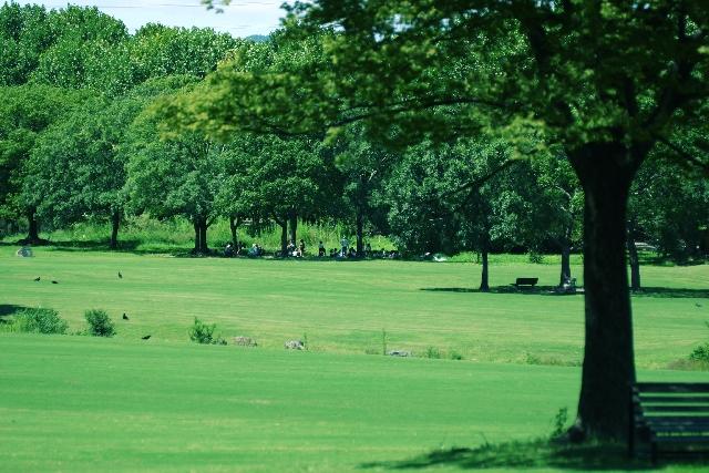 広い公園のイメージ