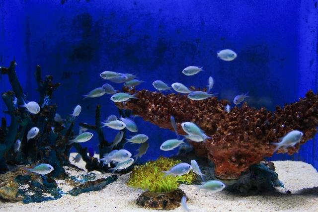 観賞魚イメージ