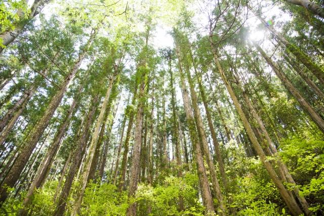 地元の木材のイメージ