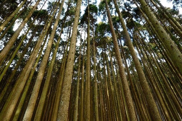 人工林のイメージ