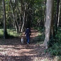 さざなみの森散歩コース