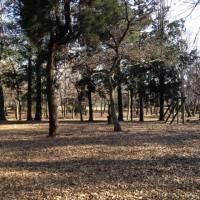 八千代台北子供の森